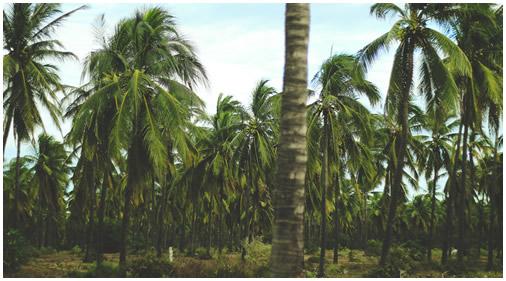 stoneisland_palmtrees