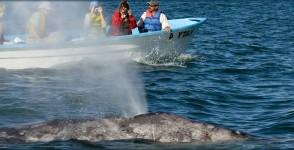 whaleexploration