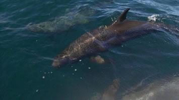 oncaexplorationsdolphins