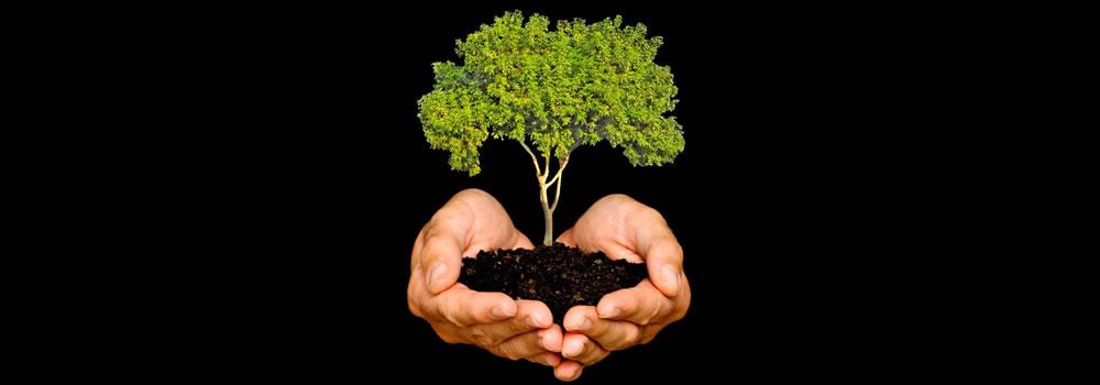 Permanent Reforestation Campaign Starts in Mazatlan