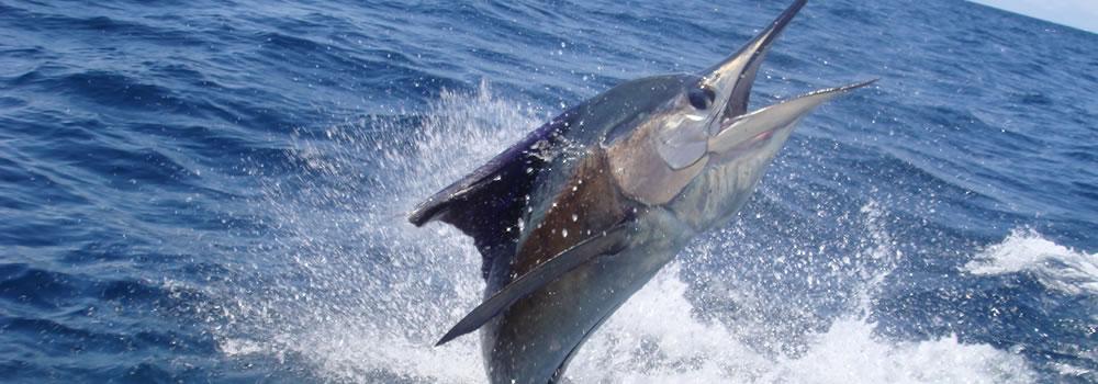 sportfishing_sinaloa