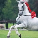 caballosdomecqmazatlan
