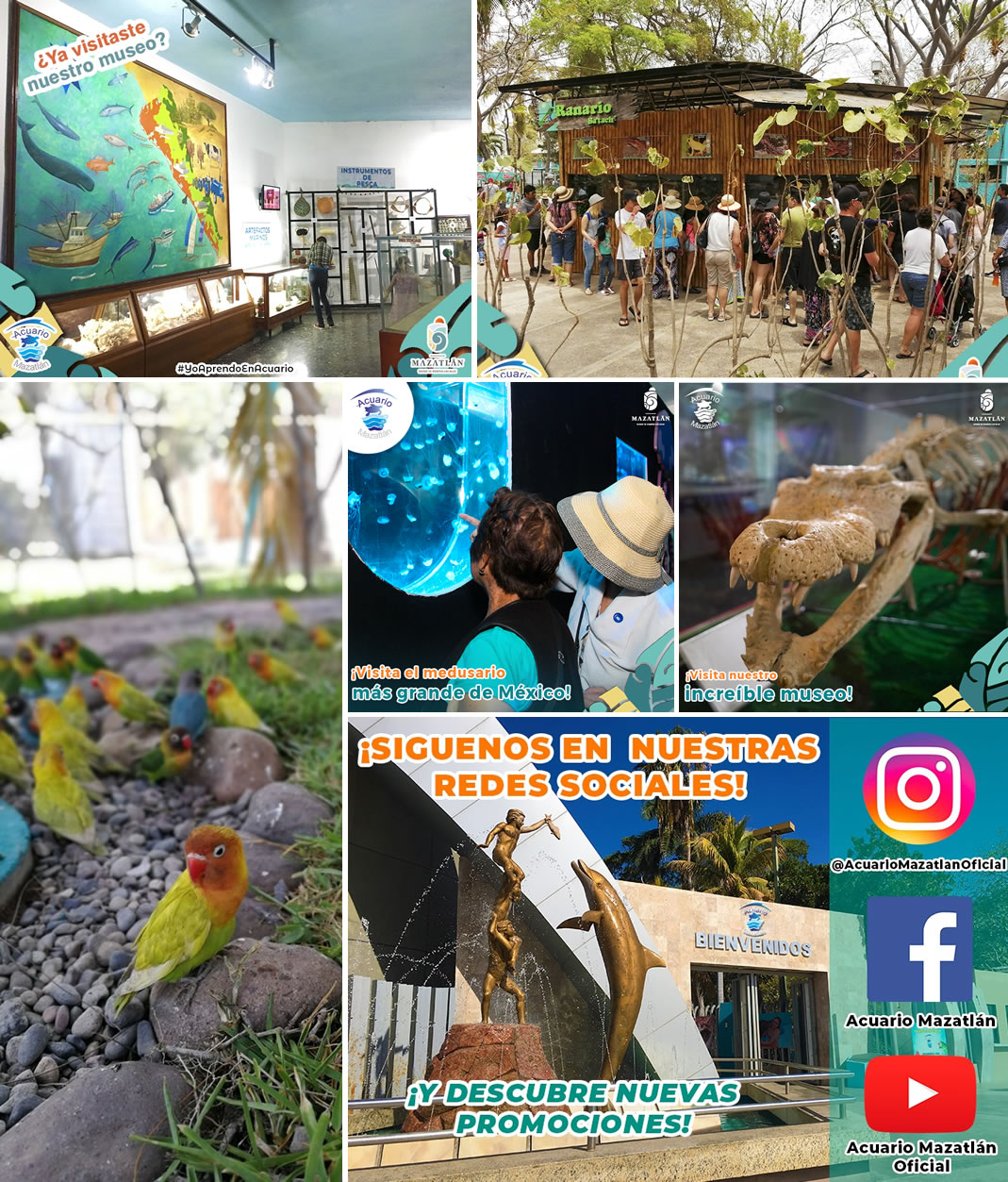 Acuario Mazatlan Verano 2019