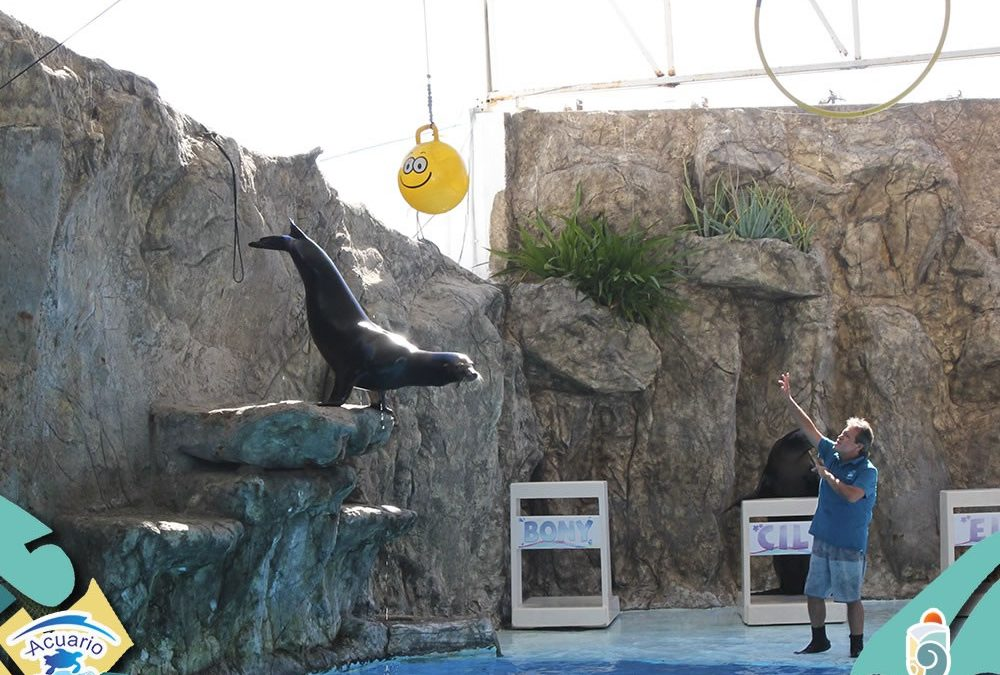 This summer visit the new attractions of Mazatlan Aquarium