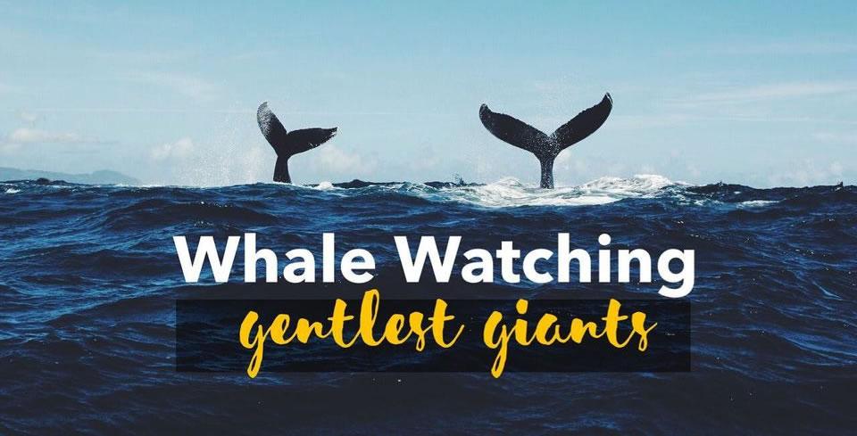 Avistamiento de Ballenas en Mazatlán